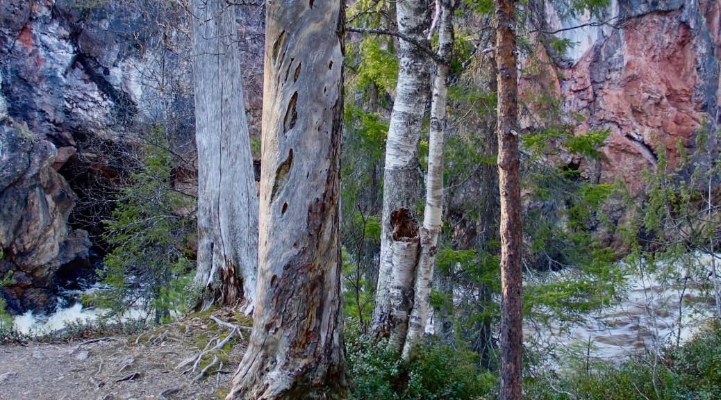 Luonnon elementit Virtaava vesi Sisäinen viisaus Vesiputous Kiutaköngäs Kuusamo