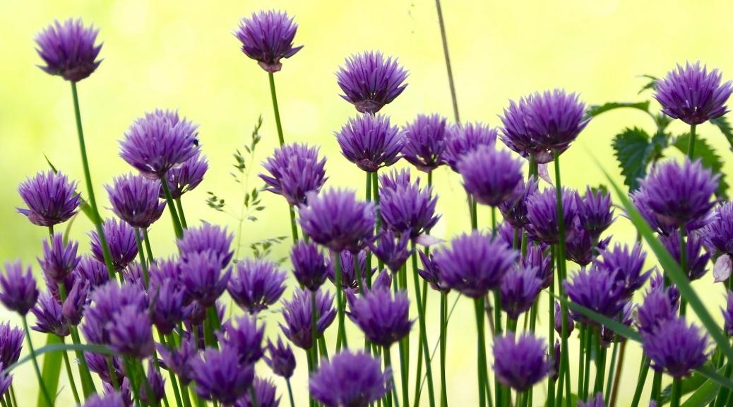 elaimet-kasvit-ja-ihmiset-tykkaa-jos-pihapiirissa-asuu-luonto
