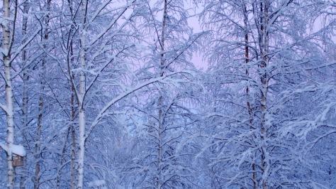Pakana joulu Yule Pakanalliset perinteet Talvipäivänseisaus Vuodenpyörä juhlapäivät Luonnonpyhät Luonnonpakanan vuodenkierto