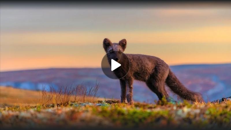 Pohjolan luonto Suomalaiset voimaeläimet Selviytyminen pohjoisessa