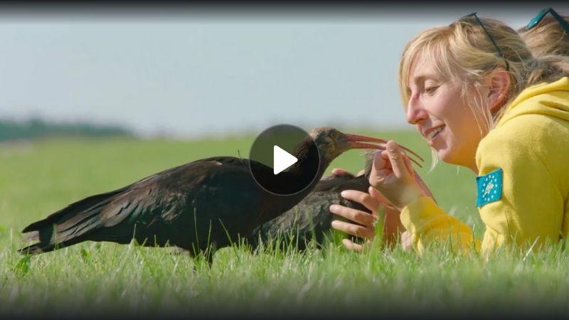 Yle Areena To Teach a Bird to Fly Uhanalaiset linnut
