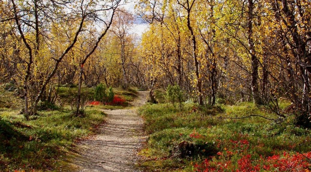 Kolmassilma.net Info Luonnonpakanan verkkolehti Verkkokauppa Luonnonmystiikka Yksinkertaistaminen Myytit ja mytologiat Luonnonnoita Uuspakanuus Uushenkisyys Pakana sivusto